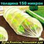 IMG_4315