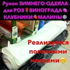IMG_6570[1]